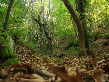 Landschaft - Foto: Belasitsa Naturpark/Ilia Levkov