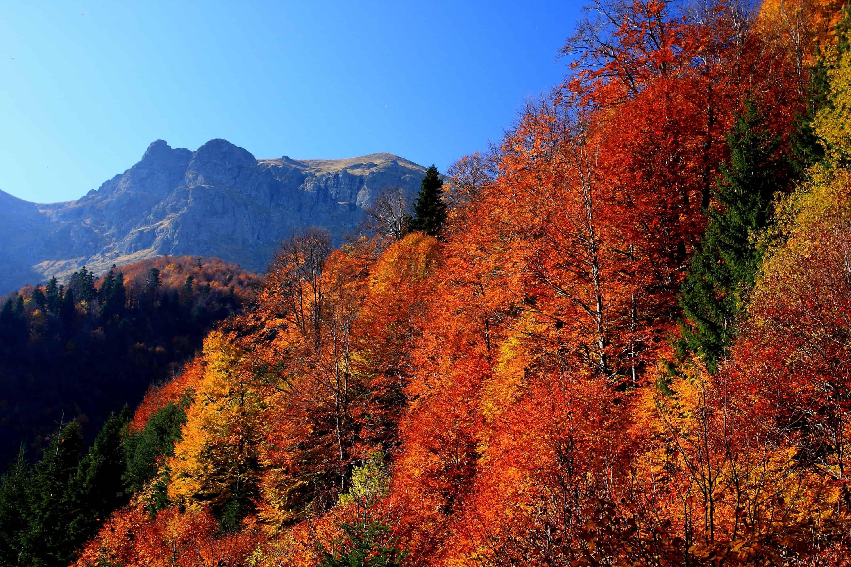 Herbst im Tazha-Gebiet - Foto: Nationalpark Zentrales Balkangebirge