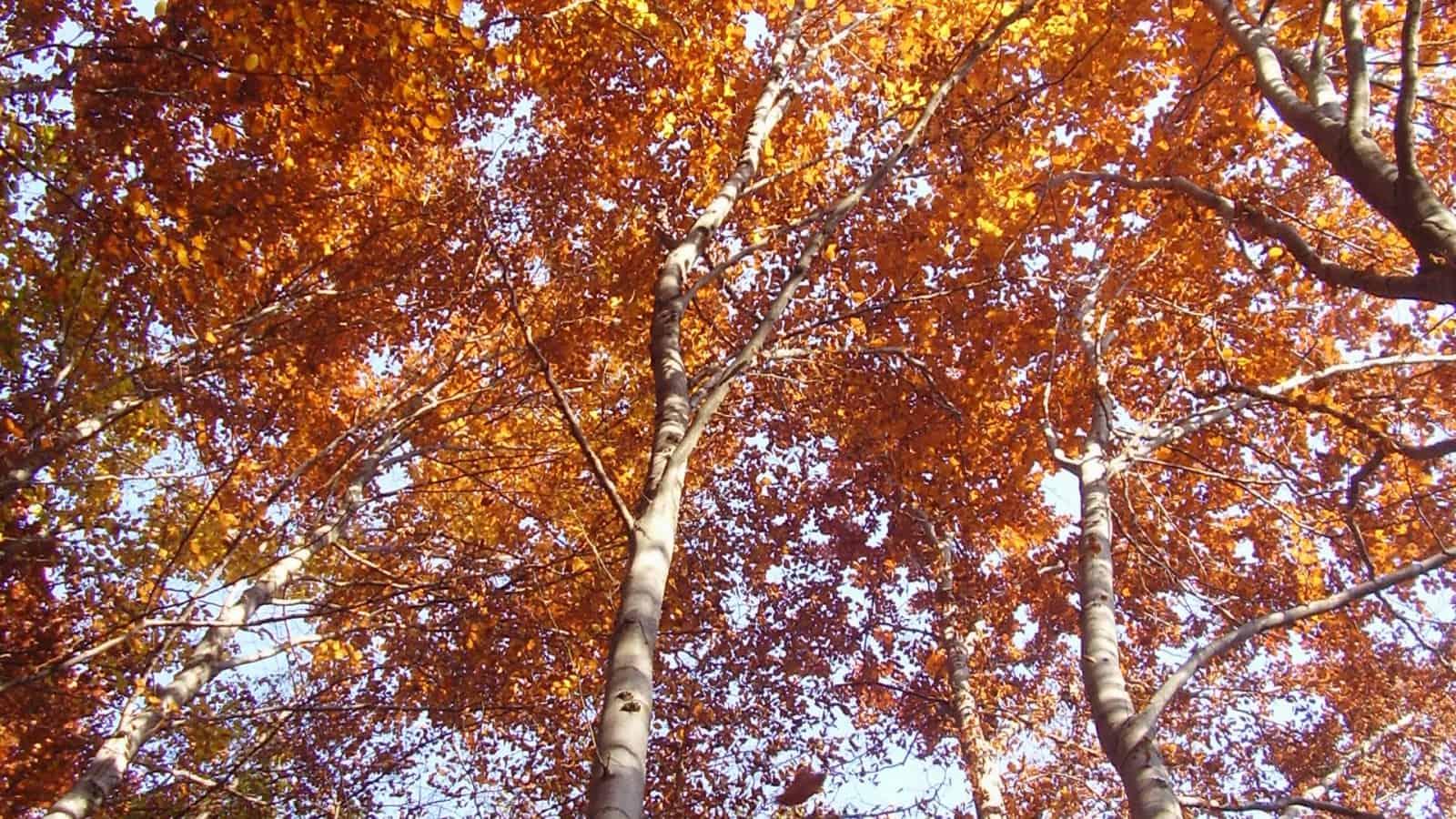 Herbst - Foto: Vitosha Naturpark