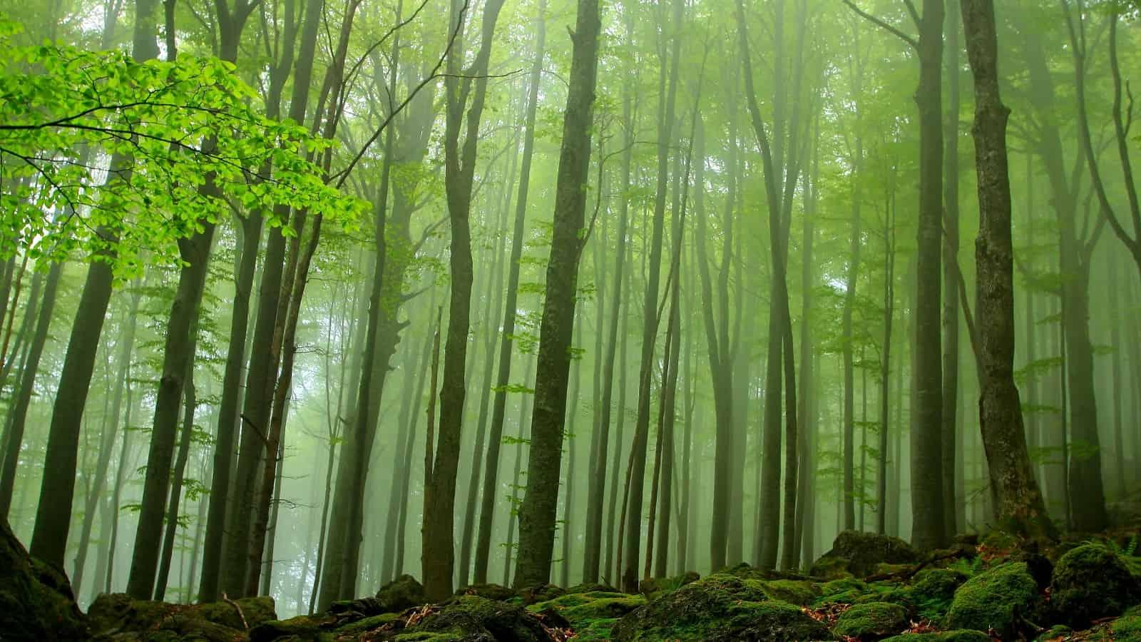Buchenwald - Foto: Nationalpark Zentrales Balkangebirge