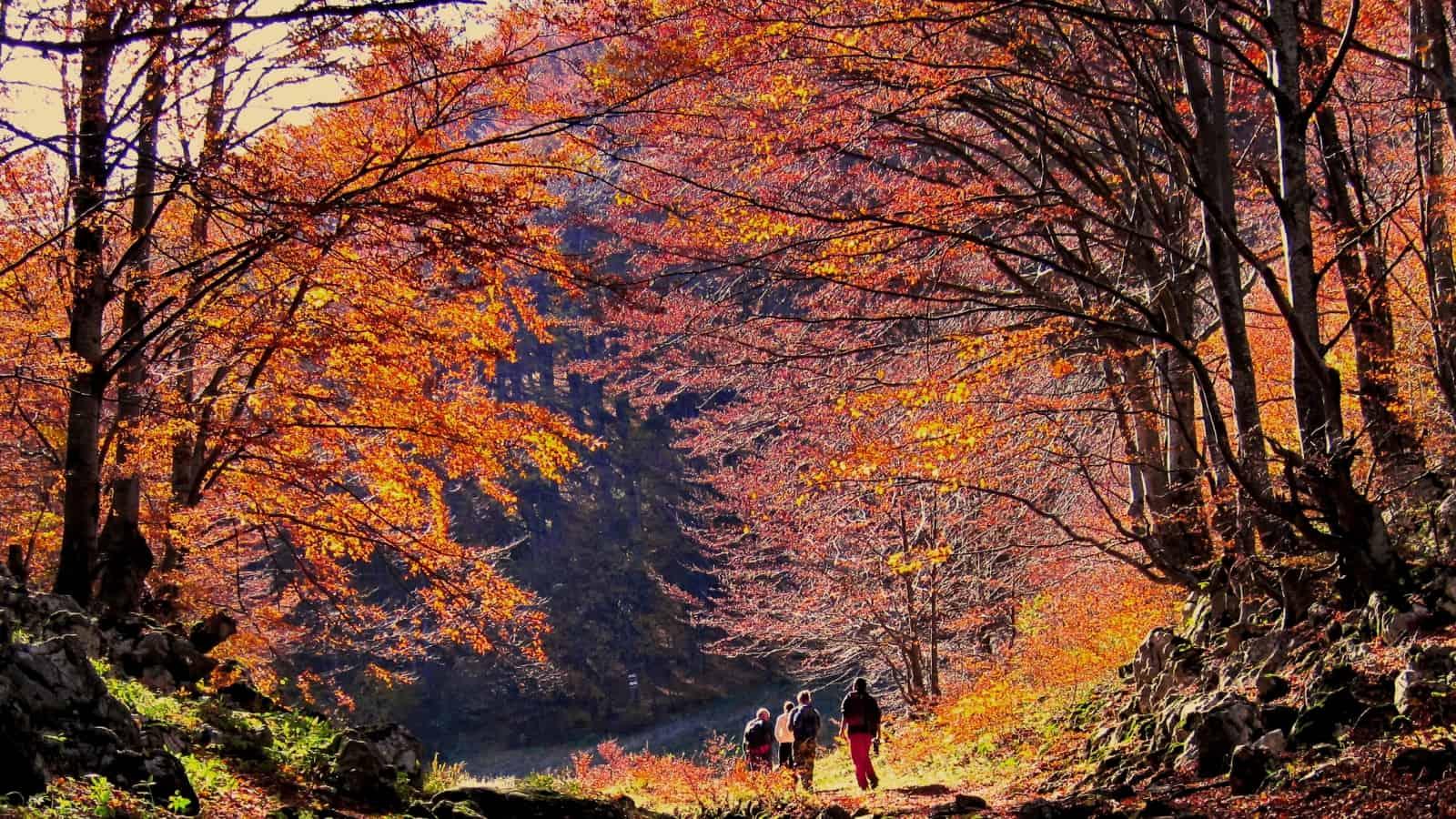 Buchenwald am Beginn der Tour - Foto: Naturpark Vachranski Balkan/Krasimir Lakovski