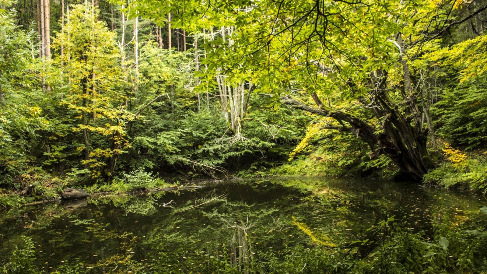 Landschaft - Foto: Belasitsa Naturpark/Foto: Ilia Levkov