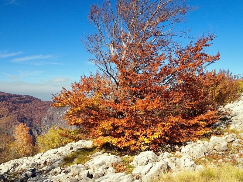 Borov-kamak-Trail- Foto: Vrachanski Balkan Naturpark