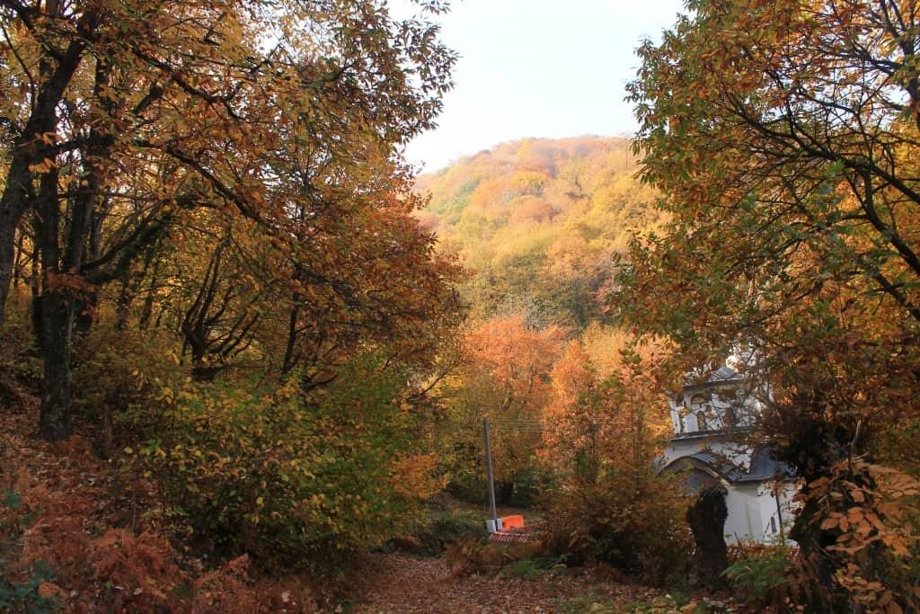 Esskastanien, Edelkastanien (Castanea sativa) - Foto: Belasitsa Naturpark/Ilia Kochev Levkov