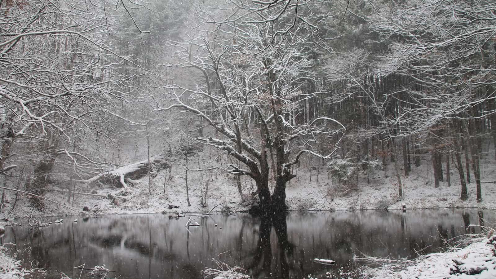 Winterszene - Foto: Belasitsa Naturpark/Ilia Kochev Levkov