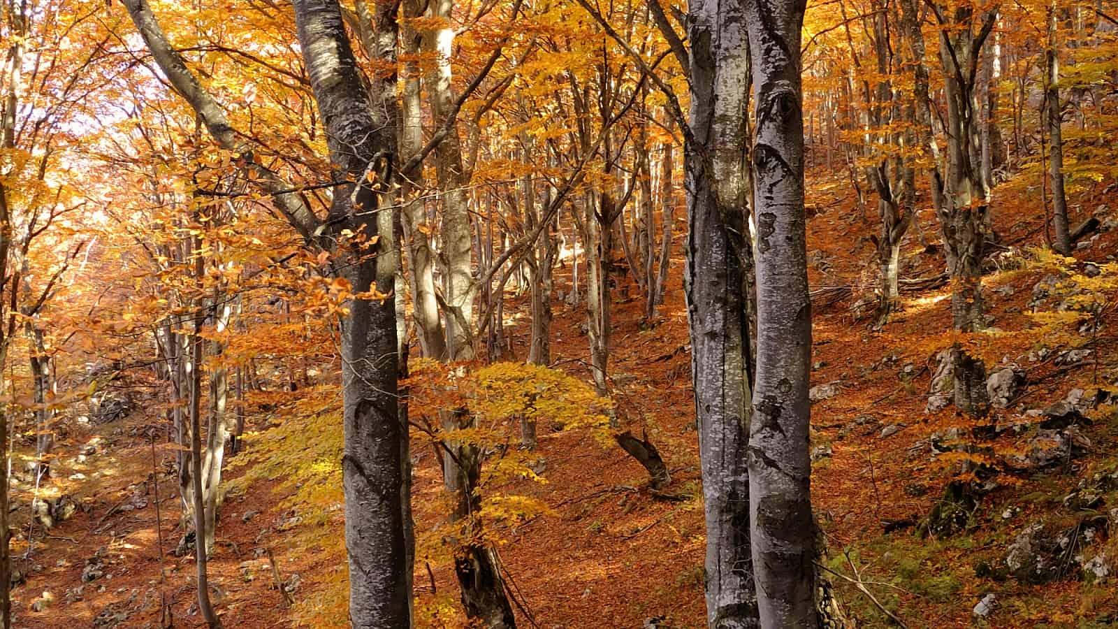 Im Herbstwald - Foto: Naturpark Vachranski Balkan/Krasimir Lakovski
