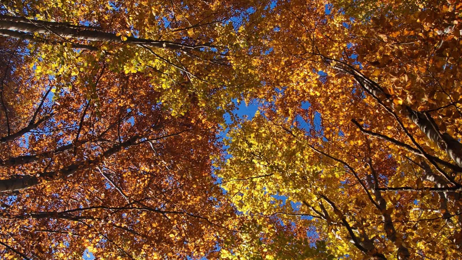 Laubverfärbung im Herbst - Foto: Naturpark Vachranski Balkan/Krasimir Lakovski