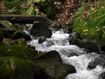 Fluß - Foto: Nationalpark Zentrales Balkangebirge