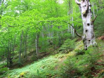 Stara reka Naturreservat | Foto: Nationalpark und Biosphärenreservat Zentrales Balkangebirge