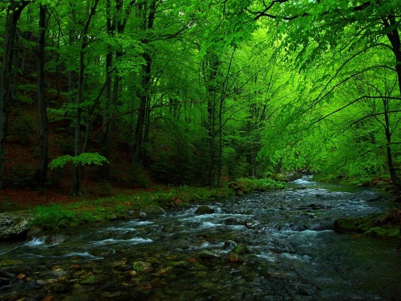 Stara Reka Fluß - Foto: Nationalpark Zentrales Balkangebirge