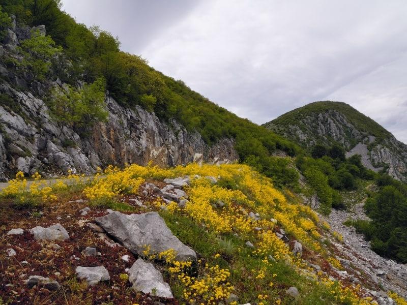Die Straße zum Vola-Gipfel - Foto: Vrachanski Balkan Naturpark