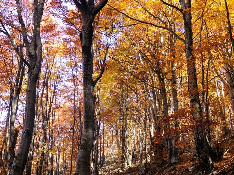 Autumn in the woods - Photo: Vrachanski Balkan Nature Park, Krasimir Lakovski