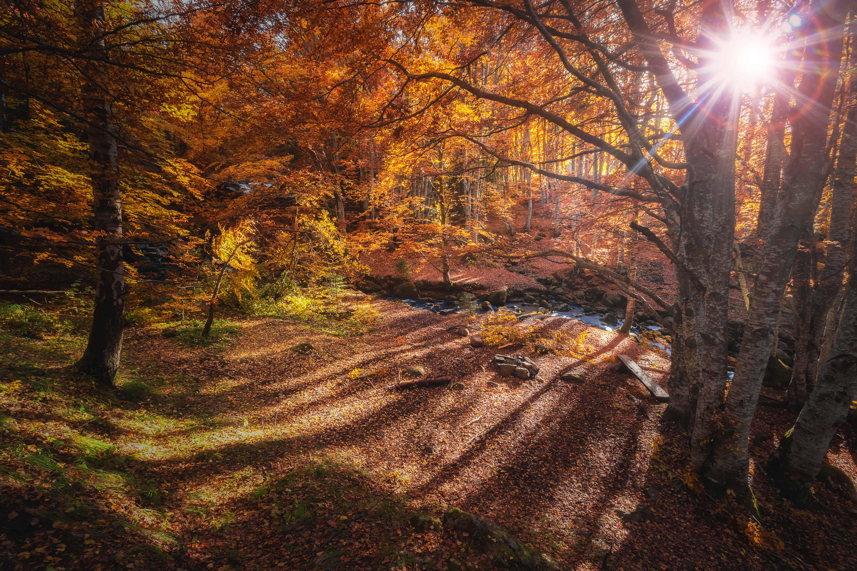 Herbst in Vitosha Foto von Veliko Karachiviev bei Unsplash.com